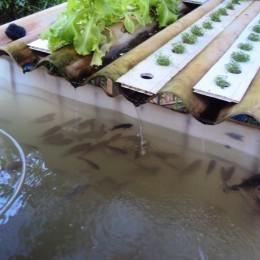 aquapónia és hidropónia Debrecenben